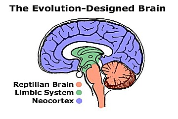 Human Brain Diagram And Functions